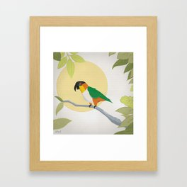 Black-Headed Caique Parrot Framed Art Print
