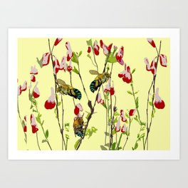 The Blue Banded Bee (Amegilla cingulata) Art Print