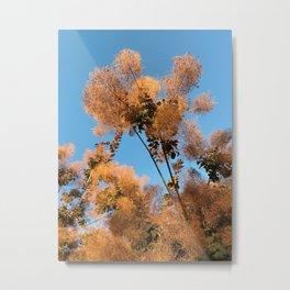 Flowering Smoketree/Smoke Bush Metal Print