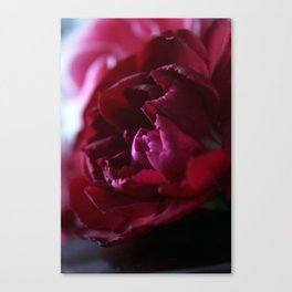 Crimson Red Carnation Canvas Print