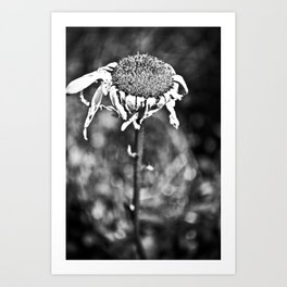 Wilted Flower Art Print