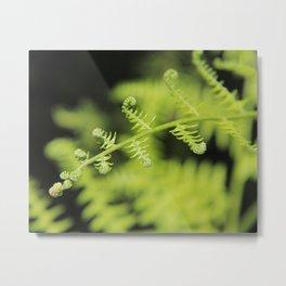 Unfurling Fern Metal Print