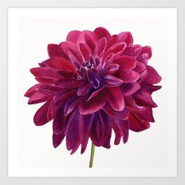 Red Violet Dahlia Blossom Art Print