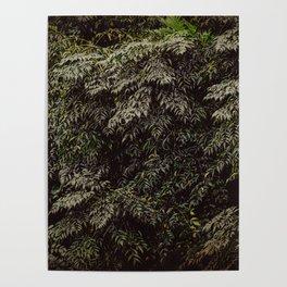Green Foliage 3 #nature Poster