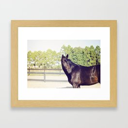 Bubba in Color Framed Art Print