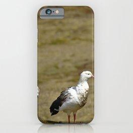 Pair of Andean goose (Chloephaga melanoptera) iPhone Case