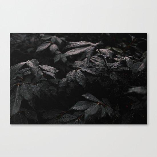 Black Leaf Canvas Print