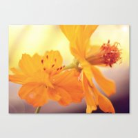 cosmos Canvas Prints featuring Cosmos by DuckyB