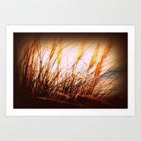 Pompous Grass Fine Art Print Art Print