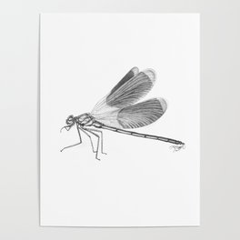 Dragonfly Illustration Poster