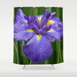 Purple Iris Flower Shower Curtain