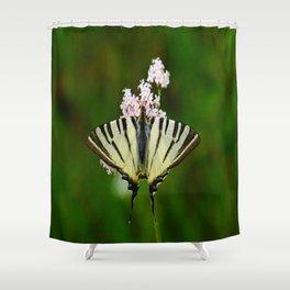 Scarce Swallowtail On Wild Garlic Flowers Shower Curtain