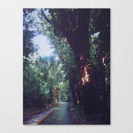 Rainforest Road Canvas Print