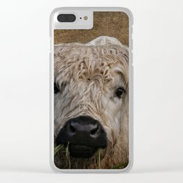 White High Park Cattle Chewing Grass Clear iPhone Case