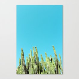 Desert Cactus Reaching for the Blue Sky Canvas Print