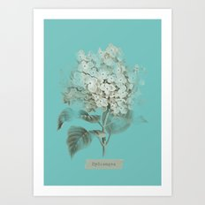 HYDRANGEA 3 Art Print