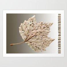 One leaf Art Print