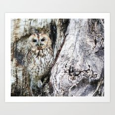 The Owl Of The Forest Art Print