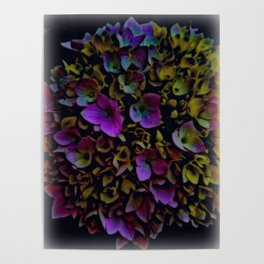 July Flowers Poster