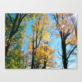 Early Autumn Sunflare Canvas Print