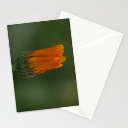 Marigold flower 3 Stationery Cards