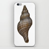 seashell iPhone & iPod Skins featuring Seashell by Judith Lee Folde Photography & Art
