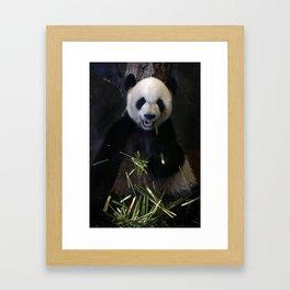 Giant Panda Eating Bamboo Framed Art Print