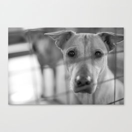 Are You The One? Canvas Print
