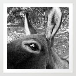 Donkey III Art Print