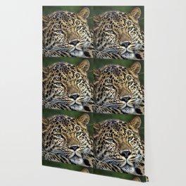 Amur Leopard Wallpaper