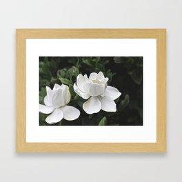 White Roses Framed Art Print