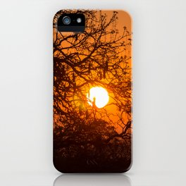 Sultry sun setting behind the sausage tree iPhone Case