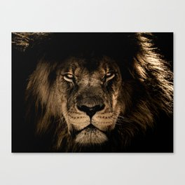 The black lion Canvas Print