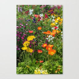 Yellow and orange poppy flowers Canvas Print