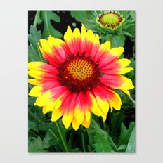 Sunset Blossom Canvas Print
