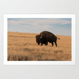 Bison Bull in Badlands Art Print