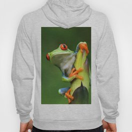 Curious Red-Eyed Tree Frog Hoody