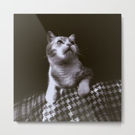 Thats my Cat !! 02 Metal Print