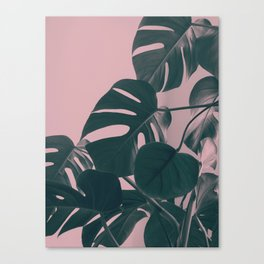 Romantic Monstera Canvas Print
