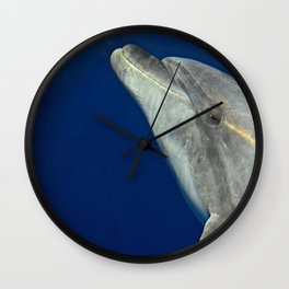 Making friends with a bottlenose dolphin Wall Clock
