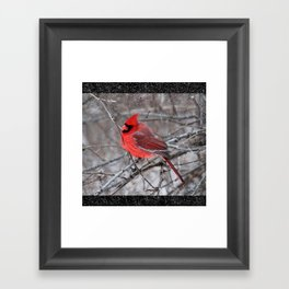 The Snow Cardinal Framed Art Print