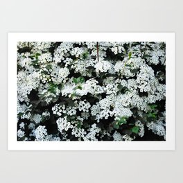 Seeing White Art Print