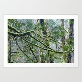 Mossy Branches Art Print