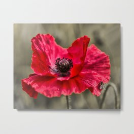 Red Poppy with Bee Metal Print