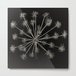 Project 'Decay'. Hogweed (Heracleum sphondylium) Metal Print