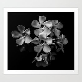 Oleander flowers in black and white Art Print