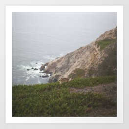 Doe Along Pacific Cliffs Art Print