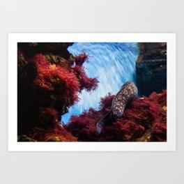 Sea Bed and Moray Art Print