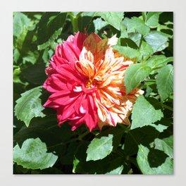 Flower of Brera Canvas Print