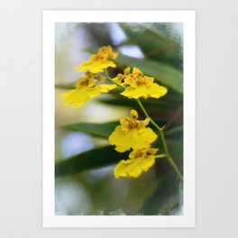 Yellow Orchids Art Print